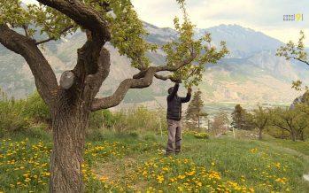 Quels défis attendent l'agriculture en Valais? Journal spécial lundi 25 mars
