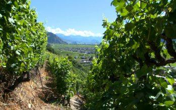 Vigneron-encaveur: un métier aux multiples facettes (30.06.2017)