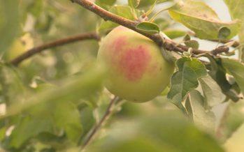 Pesticides dans l'arboriculture: un projet pour une réduction de 30% en 6 ans