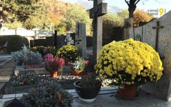 Les principaux fournisseurs de chrysanthèmes de Suisse sont valaisans