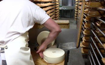 Dans les coulisses de la fabrication du fromage à raclette de brebis