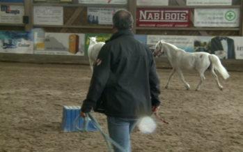 Le sport amateur valaisan prépare sa reprise, tour d'horizon entre karaté, tennis et équitation