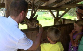 Soleil, sourires et touristes au zoo des Marécottes