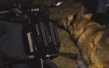 Le Canton réfléchit à la réintroduction des cours canins obligatoires après leur abandon par la Confédération