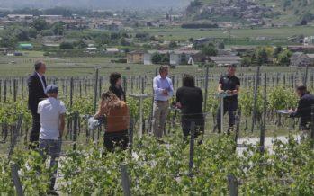Viticuture: Leytron, capitale suisse de la recherche