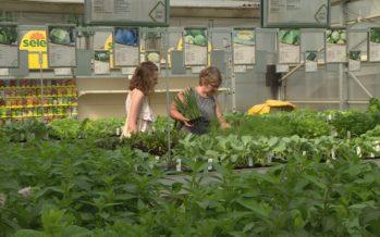 Le boom des jardins fait bourgeonner les pépinières valaisannes