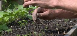 Cultiver son jardin pour se reconnecter à la société par la terre