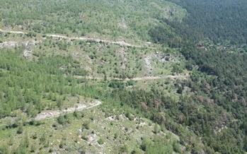 Revitalisation de la forêt à Loèche: une étude démontre les bienfaits des incendies sur la biodiversité
