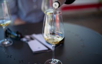 Millésime 2019: des vins pleins de fraîcheur et de dynamisme