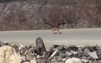 A nouveau un loup aux abords du village de Loye: il est recommandé de ne pas laisser les enfants jouer ou se balader sans surveillance