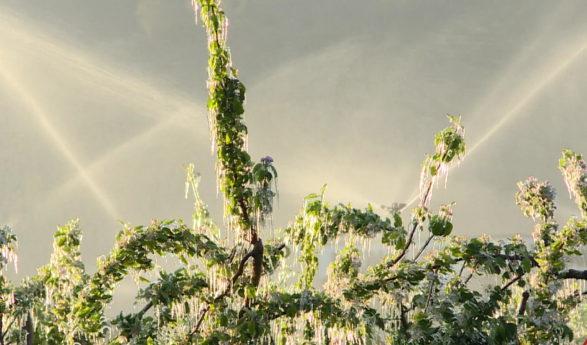 Lutte contre le gel en Valais: la mise à neuf des systèmes d'irrigation se poursuit dans la plaine du Rhône
